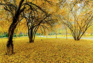 秋,看在眼里的不是萧条,而是美...