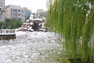 东区假山雪景